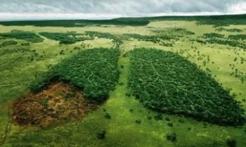 Леса никакие не лёгкие планеты  - lesa.jpg