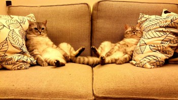 Аргумент в пользу существования Бога - Happy-caturday-lazy-day-on-the-couch-3.jpg